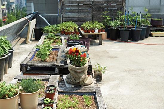 [정원]도심속에서 자연을 즐기는 방법..._圭_ : 네이버 블로그