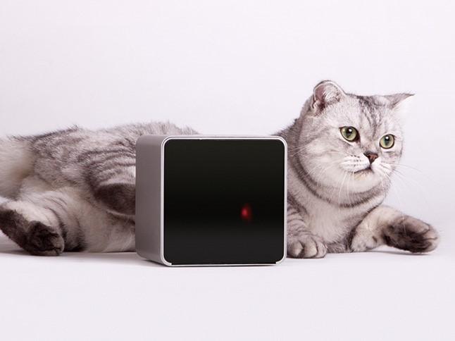 애완동물을 키우는 사람들을 위한 스마트 액세서리 이미지 3