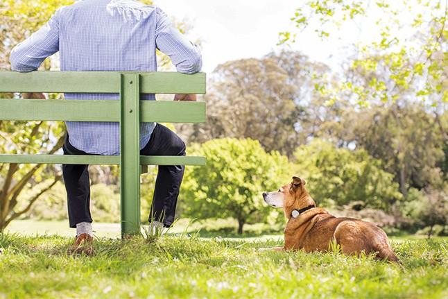 애완동물을 키우는 사람들을 위한 스마트 액세서리 이미지 1