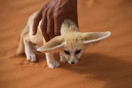 사하라 사막 이미지 5