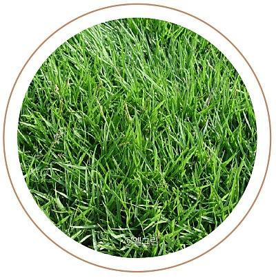 수종부터 관리까지 알아보는 잔디 가이드 이미지 2