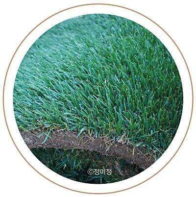 수종부터 관리까지 알아보는 잔디 가이드 이미지 6