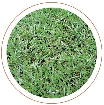 수종부터 관리까지 알아보는 잔디 가이드 이미지 5