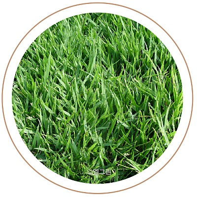 수종부터 관리까지 알아보는 잔디 가이드 이미지 3