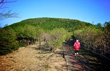 모구리오름으로 가는 길. 산책로를 따라 40분 정도 걸을 수 있다. <사진:이윤정 기자>
